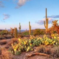 cpa exam requirements in arizona