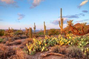 cpa exam requirements in arizona